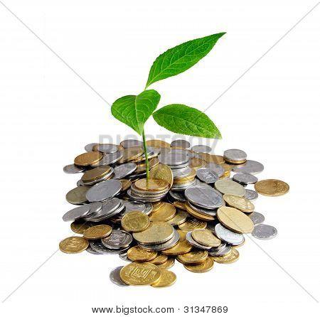 Money And Plant