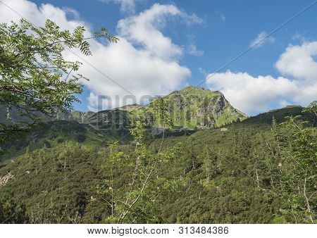 Beautiful Mountain Landscape With Rowen And Spruce Trees, Dwarf Scrub Pine And Sharp Green Grassy Mo