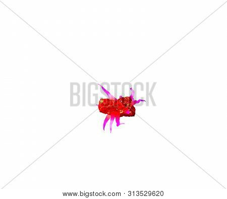 Red Awful Jelly With Pink Tentacles Isolated On White Background - Minus (dash) Of Awful Monstrous F