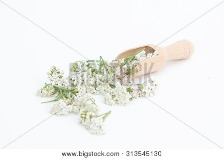 Fresh Yarrows Flowers On The White Background