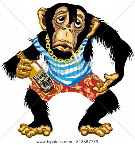 Cartoon Drunk Chimpanzee Great Ape With Golden Chain On The Neck And Holding Empty Bottle Of Alcohol