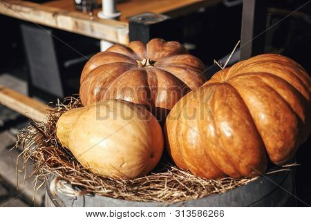 Halloween Street Decor. Pumpkin On Barrel With Hay In City Street, Holiday Decorations Store Fronts