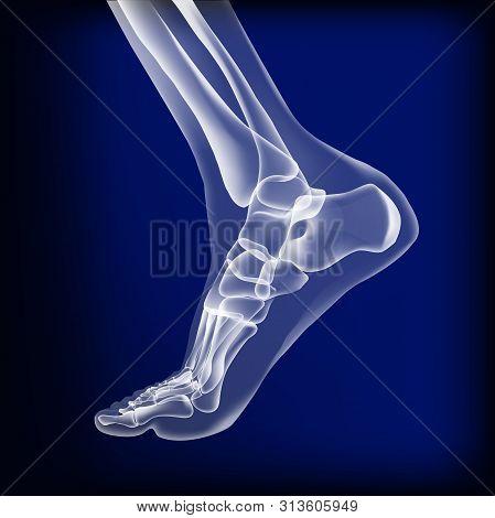 Dark Blue Visualization Of Bones Of Foot. Anatomy Of Joints, Human Leg Realistic Transparente Skelet