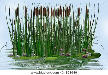 water lily and rush in a water lake