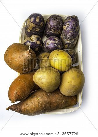 Mixed Colour Yellow, Purple Orange Potatoes, Small, Stubby, Finger-shaped Type Of Potato Which May B
