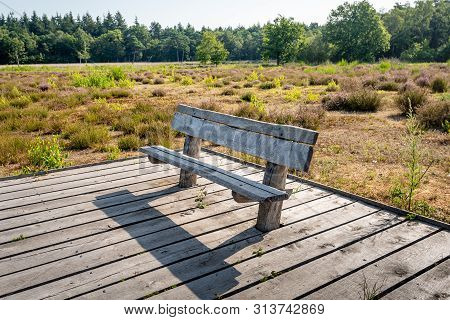 Rough Wooden Bench On A Plank Platform In A Dutch Nature Reserve With Flowering Heather Plants. The