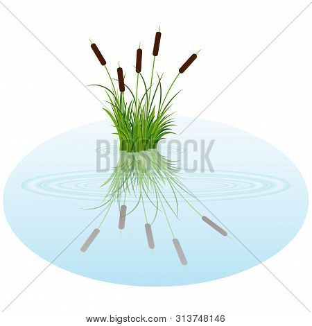 Vector Bush Reeds On The Water. Reeds Reflected In The Lake Water With Rounds