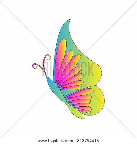 Butterfly Design. Beautiful Butterfly Vector. Butterfly Isolated On White Background. Butterfly - Ve