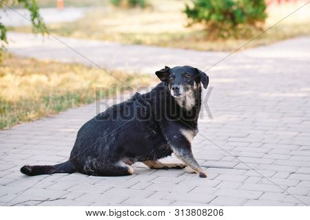 Crippled Dog Without Three Legs Lying On The Road