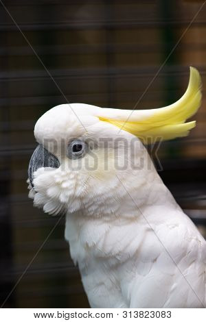 White Cockatoo Close Up Portrait Birds Nature Zoo Nice