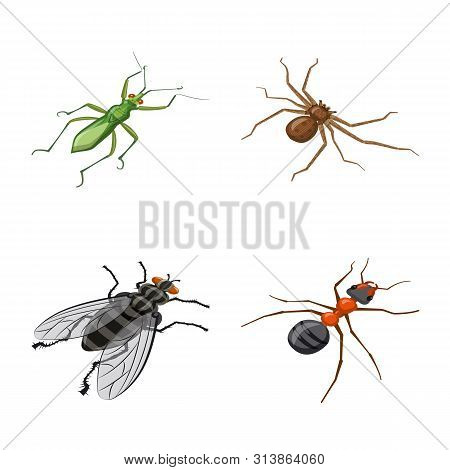 Vector Design Of Insect And Fly Symbol. Collection Of Insect And Entomology Stock Symbol For Web.