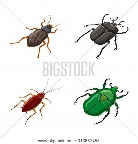 Vector Design Of Insect And Fly Logo. Set Of Insect And Entomology Vector Icon For Stock.