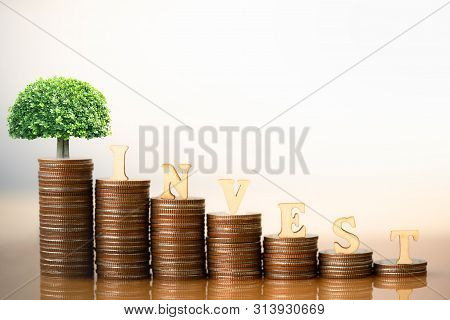 Small Plant Tree And Wooden Blocks With The Text Invest On Coins Stack. Retirement Planning. Money S