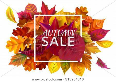 Fall Sale Banner. Autumn Season Sales, Autumnal Discount And Fallen Leaves Banners Frame. October Pu