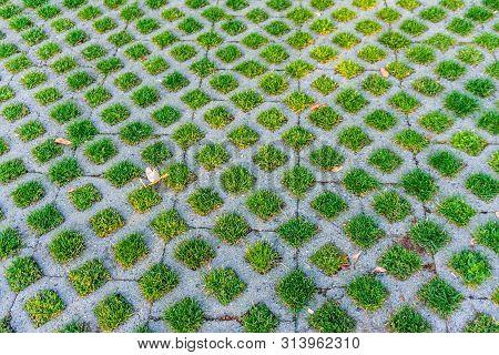 Grass Grows Through Pervious Pavement. Background Shot.