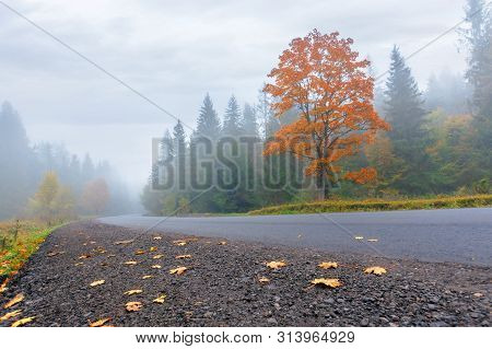 New Asphalt Road Through Forest In Fog. Mysterious Autumn Scenery In The Morning. Trees In Vivid Ora