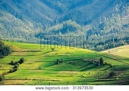 Beautiful Rural Area Of Carpathian Mountains. Trees And Agricultural Fields On Hills. Landscape In D