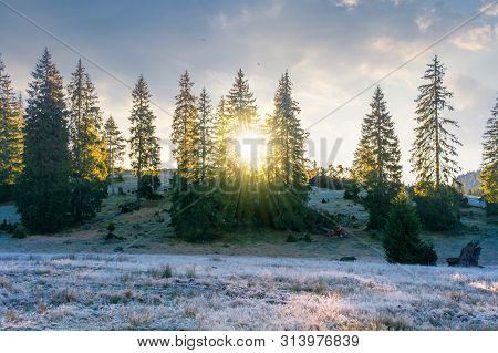 Spruce Trees On The Hill At Sunrise. Beautiful Autumn Nature Scenery Of Apuseni Natural Park. Hazy W