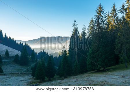 Beautiful Autumn Scenery In Mountains. Coniferous Trees On Steep Slopes Of A Hill. Distant Valley Fu