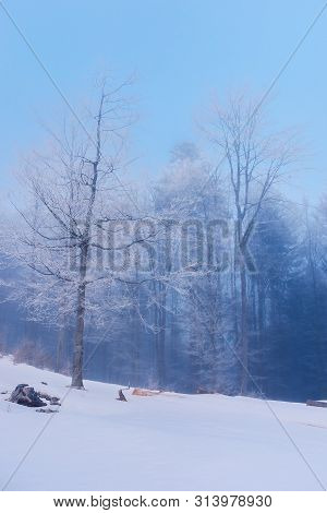 Beautiful Winter Scenery In Forest. Trees In Hoarfrost On A Snow Covered Hill. Blue Gloomy Dawn Back