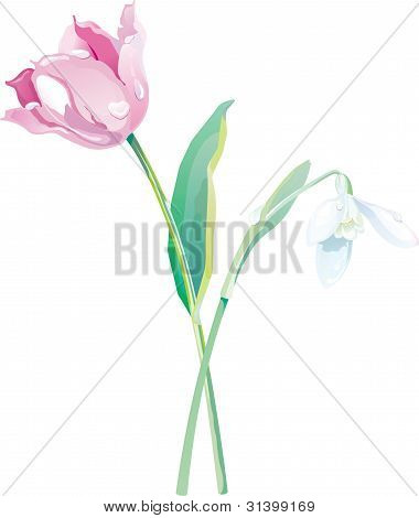 Tulip and snowdrop vector illustration