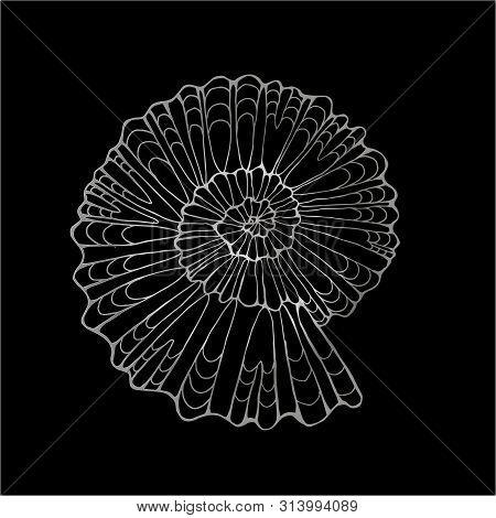 Black White Illustration Of A Petrified Snail Shell. Chalk On A Blackboard.
