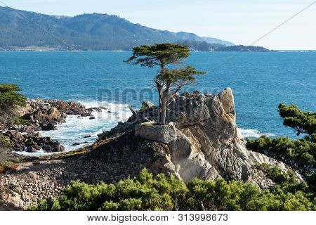 Pebble Beach, Monterey, California, United States - February 23, 2019: Lone Cypress Tree On 17 Mile