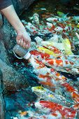This feed koi by milk bottle is very cute poster