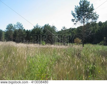 The Nature Of Central Ukraine In Summer. Fields And Woodland.