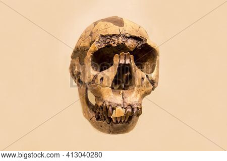 The Skull Of A Man Working With The Lower Jaw (latin: Homo Ergaster) Is Isolated On A White Backgrou