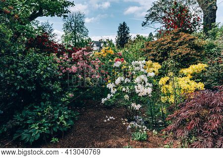 Beautiful Garden With Blooming Trees During Spring Time, Wales, Uk