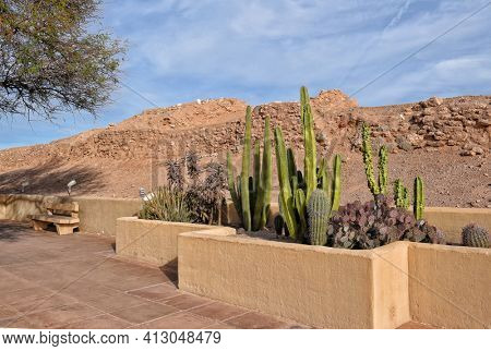 A xeriscape cactus garden, a style of landscape design requiring little or no irrigation or other maintenance, used in arid regions.