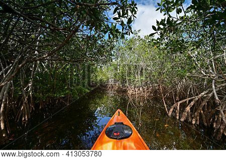 View From Kayak Amidst Mangrove Trees Of Nine Mile Pond In Everglades Np.