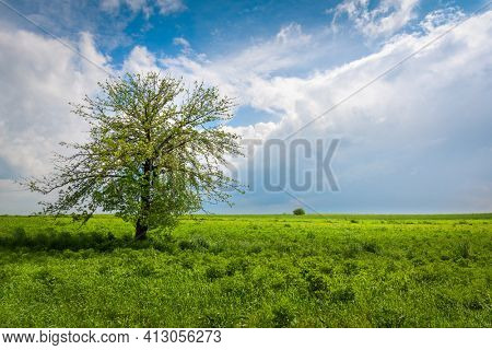 Green meadow with a tree and beautiful sky