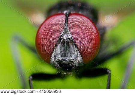 Macro Photography Of Head Of Black Blowfly On Green Leaf