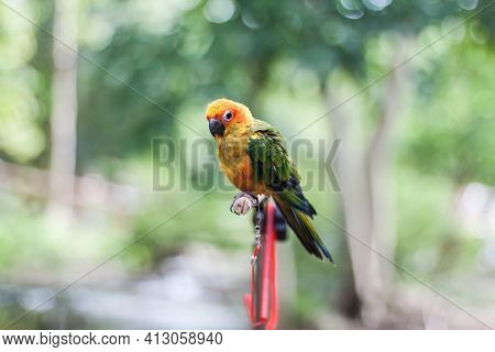 Parrot Sun Conure Beautiful Parrot On A Branch.\nparrot, A Friend Who Speaks Human Language.