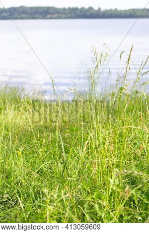 Close-up Of Bright, Luscious Green Grass. River Daugava Bank In Summer. Riverbank In The Background