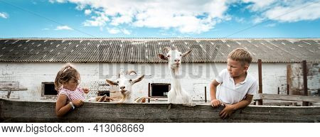 Kids On Goat Farm With White Goats. Funny Time With Animals. Children Boy And Girl Play With Goats.