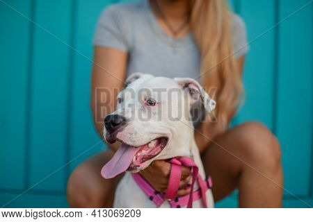 Close Up Portrait Of Woman And Pitbull Against Colorful Background