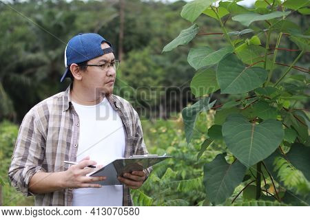 Asian Male Farmer Plantation Supervisor Checking Plant Growth, Modern Natural Organic Cultivation In