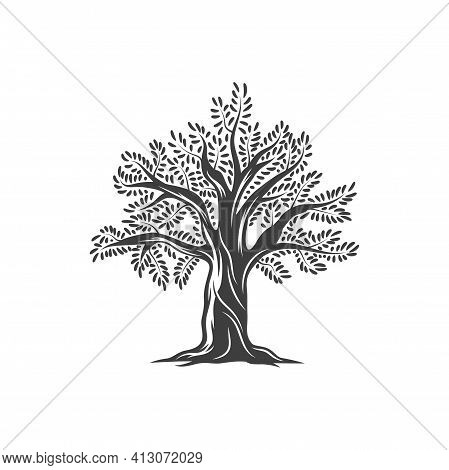 Olive Tree Icon, Olives And Leaves On Branches, Vector Flat Line Label. Olive Oil Tree Sign For Comp