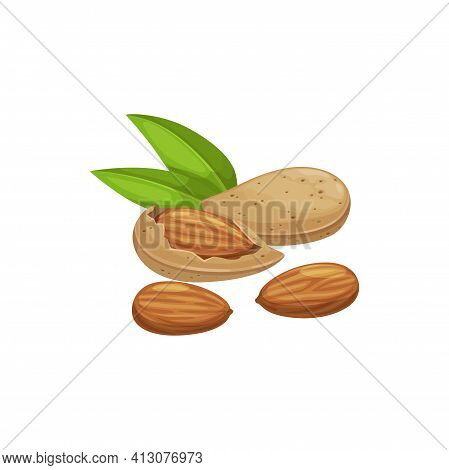 Shelled Almond Seeds Isolated Drupes Of Fruit In Hard Shell Peeled And Unpeeled, With Green Leaves.