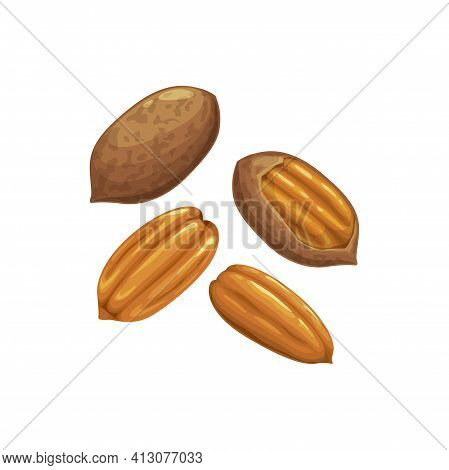 Pecan Nut Or Carya Illinoinensis Isolated Peeled And Unpeeled Food Snack In Hard Shell. Vector Organ