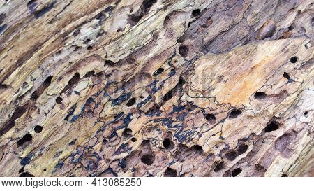 Full Frame Of Decaying Tree Bark In Shades Of Brown With Holes