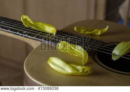 Fading Flowers And An Acoustic Guitar. Petals Yellow Tulips Lie On The Guitar Deck. Fading Popularit
