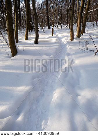 A Small Trail Through A Wintry Forest.