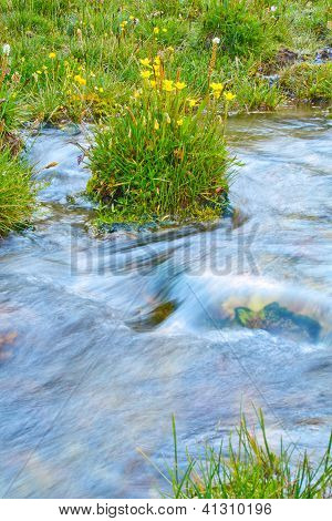 Blumen am Ufer des Streams, transparent