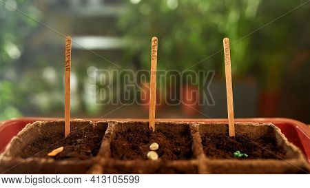 Shooting From Close Up The Grains Lying In The Ground. Home Garden Concept. Rocking Land With Grains