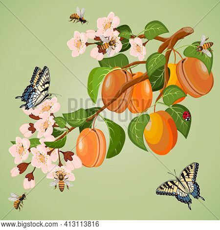 Branch With Apricots In A Color Illustration.vector Illustration With A Branch Of Apricot And Insect