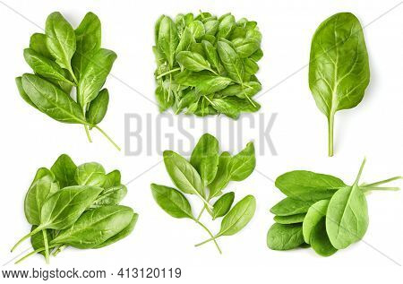 Collage mix set of Spinach bunch of fresh green leaf. Healthy eating natural organic vegetable. Greens with bed, isolated on white background.